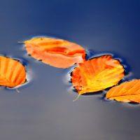 leaves-2912818_1920